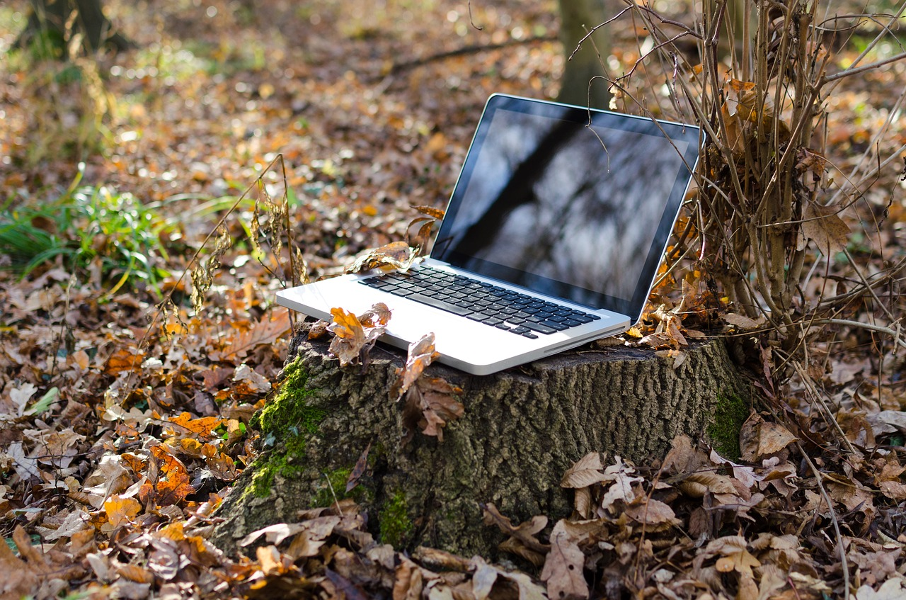 Computer on a Tree Stump